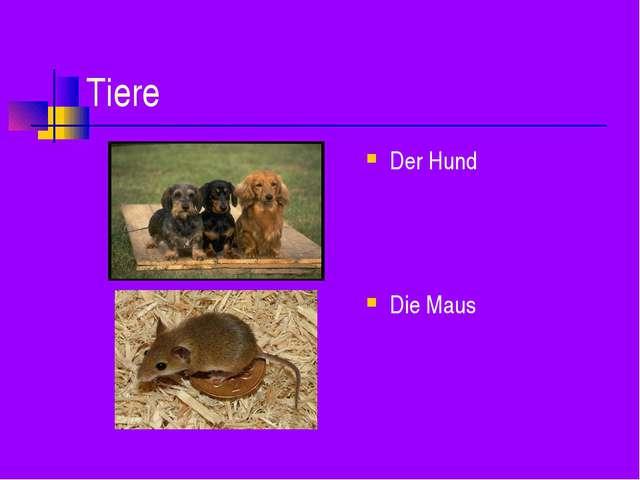 Tiere Der Hund Die Maus