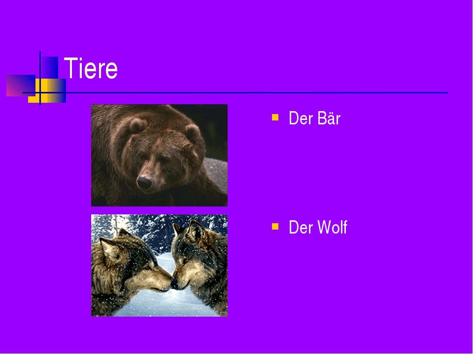 Tiere Der Bär Der Wolf