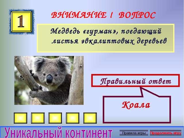 ВНИМАНИЕ ! ВОПРОС Медведь «гурман», поедающий листья эвкалиптовых деревьев Пр...