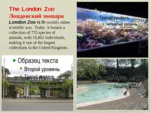 The London Zoo Лондонский зоопарк London Zoo is th world's oldest scientific