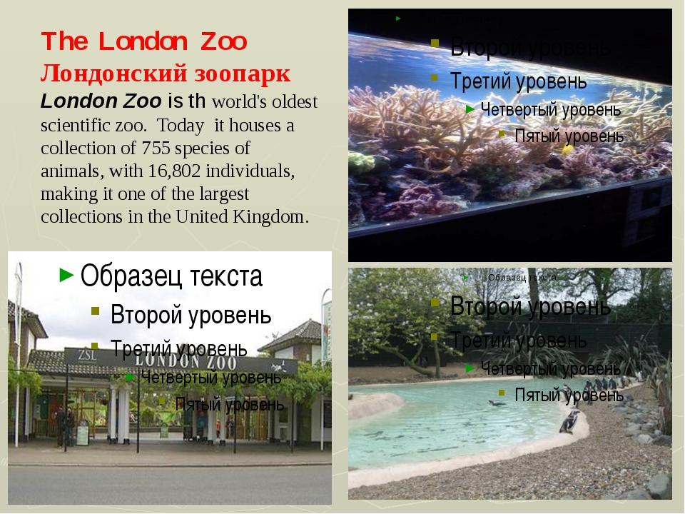 The London Zoo Лондонский зоопарк London Zoo is th world's oldest scientific...
