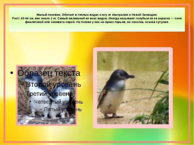 Малый пингвин Малый пингвин. Обитает в теплых водах к югу от Австралии и Ново...