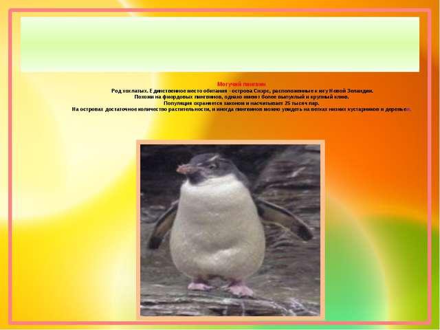 Могучий пингвин Род хохлатых. Единственное место обитания - острова Снэрс, ра...