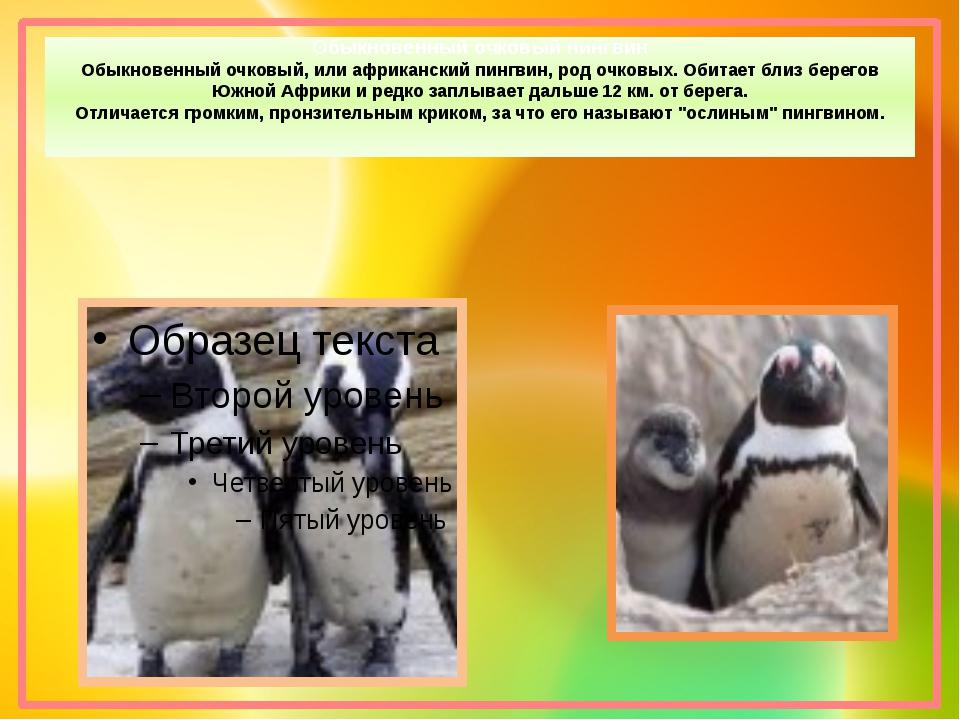 Обыкновенный очковый пингвин Обыкновенный очковый, или африканский пингвин, р...