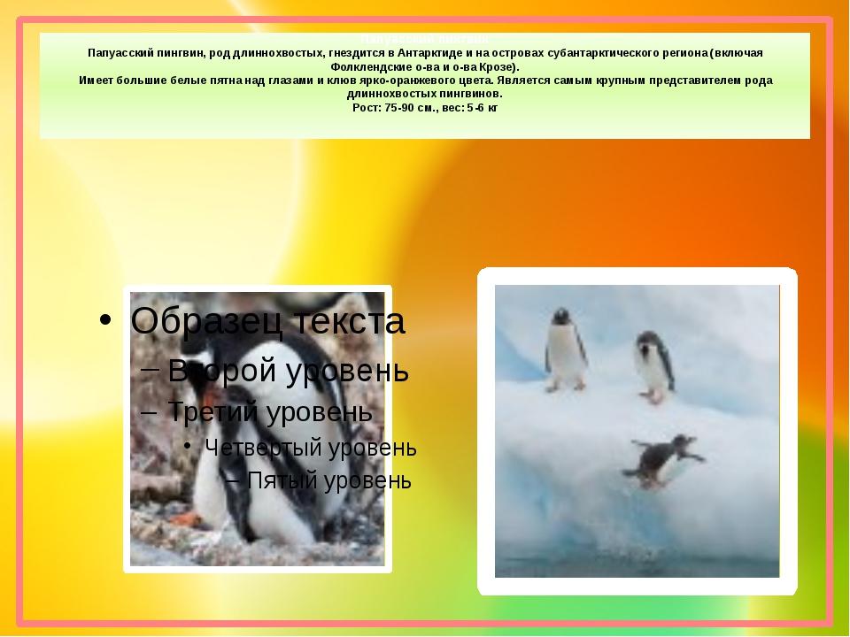 Папуасский пингвин Папуасский пингвин, род длиннохвостых, гнездится в Антаркт...