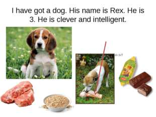 I have got a dog. His name is Rex. He is 3. He is clever and intelligent. He