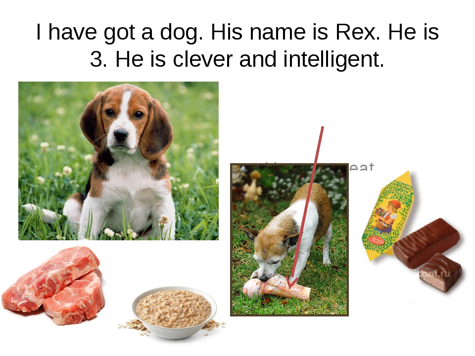 I have got a dog. His name is Rex. He is 3. He is clever and intelligent. He...