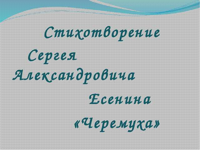Стихотворение Сергея Александровича Есенина «Черемуха»