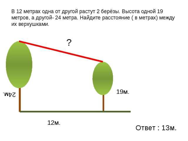 В 12 метрах одна от другой растут 2 берёзы. Высота одной 19 метров, а другой-...