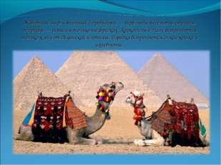 Животный мир, известный с древности — верблюды, бегемоты, страусы, жирафы — о