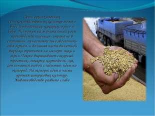 Среди других важных сельскохозяйственных культур можно выделить пшеницу, куку
