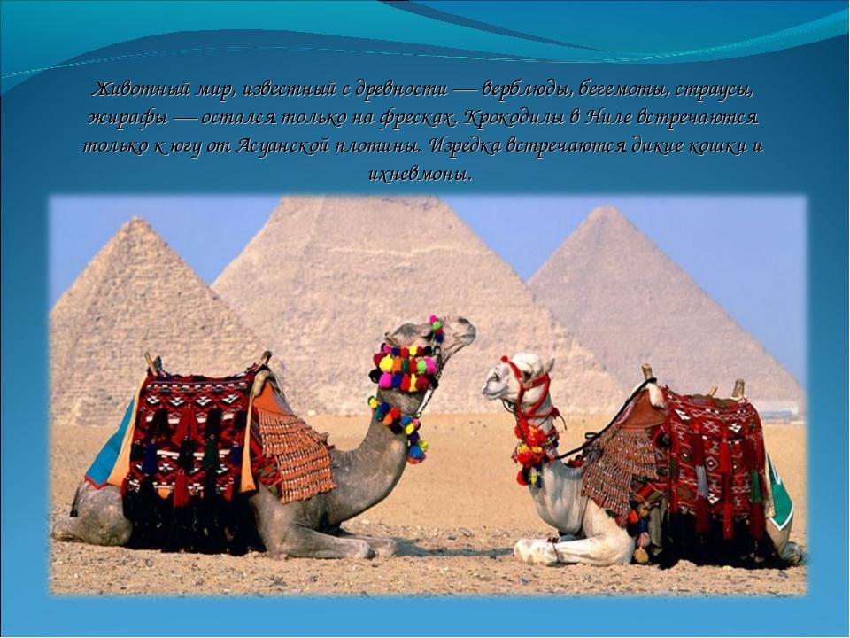 Животный мир, известный с древности — верблюды, бегемоты, страусы, жирафы — о...