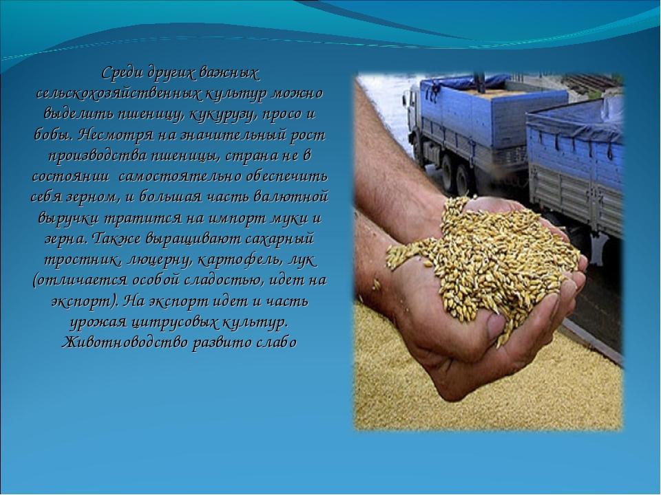 Среди других важных сельскохозяйственных культур можно выделить пшеницу, куку...