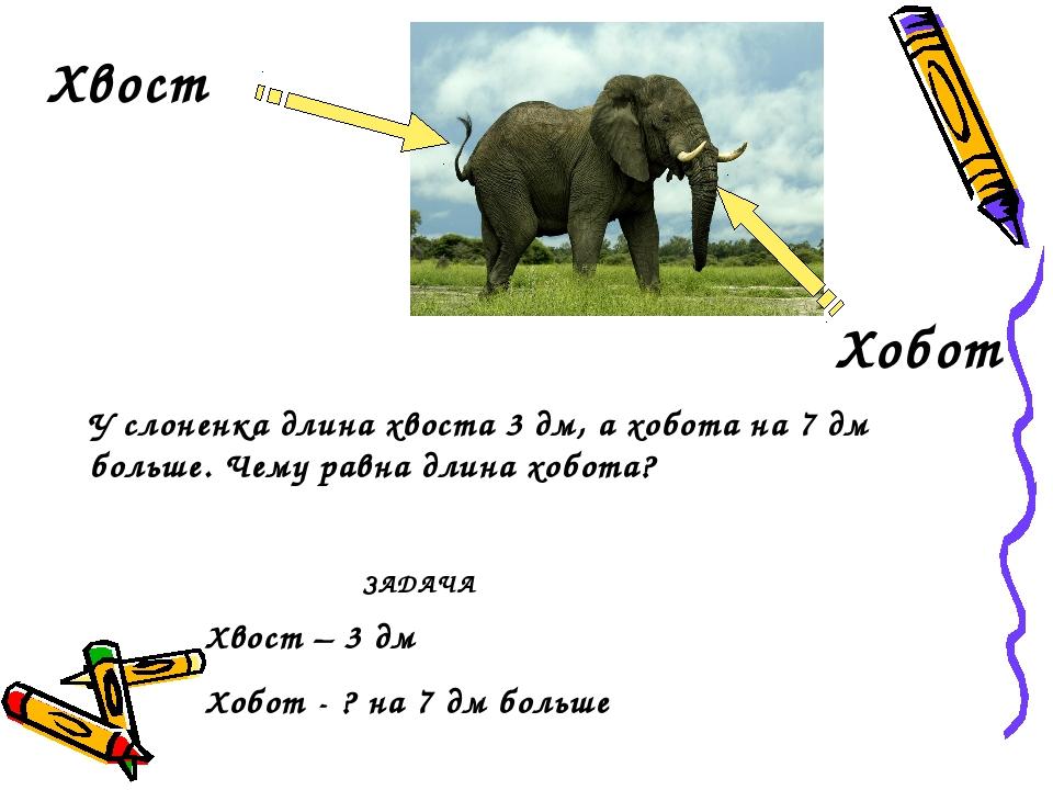 Хвост Хобот  Хвост – 3 дм Хобот - ? на 7 дм больше У слоненка длина хвоста...
