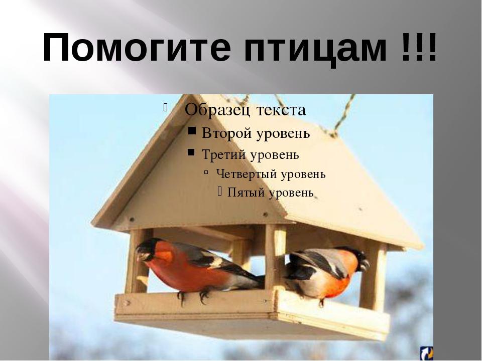Помогите птицам !!!