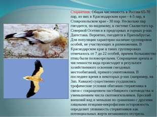 Стервятник. Общая численность в России 65-70 пар, из них в Краснодарском крае
