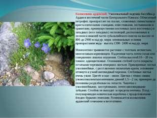 Колокольчик ардонский. Узколокальный эндемик бассейна р. Ардов в восточной ча