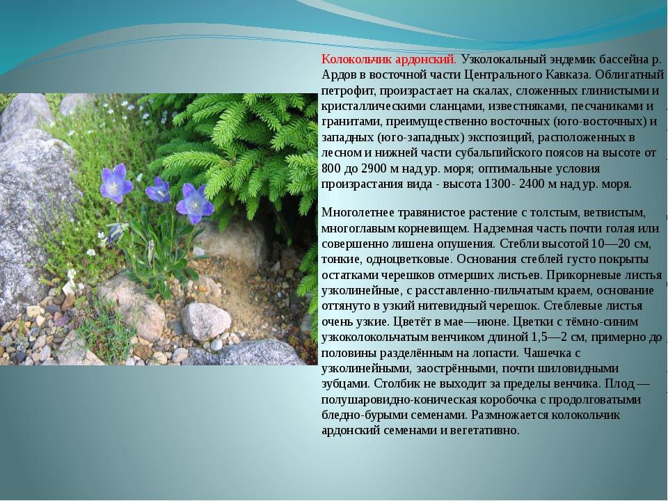 Колокольчик ардонский. Узколокальный эндемик бассейна р. Ардов в восточной ча...