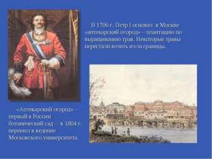 В 1706 г. Петр I основал в Москве «аптекарский огород» – плантацию по выращив