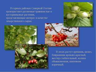 В горных районах Северной Осетии произрастают различные травянистые и кустар