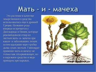 Это растение в качестве лекарственного средства использовалось еще в древней
