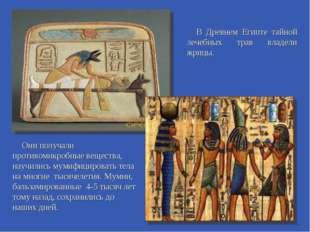 В Древнем Египте тайной лечебных трав владели жрицы. Они получали противомикр