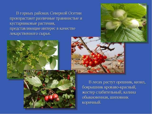 В горных районах Северной Осетии произрастают различные травянистые и кустар...