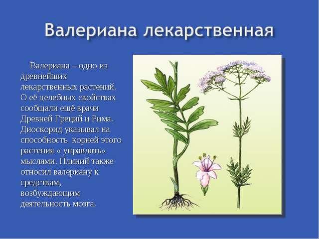 Валериана – одно из древнейших лекарственных растений. О её целебных свойства...