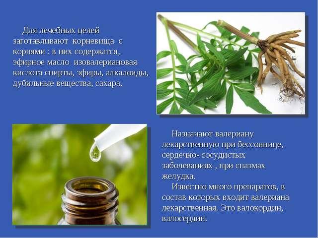 Для лечебных целей заготавливают корневища с корнями : в них содержатся, эфир...