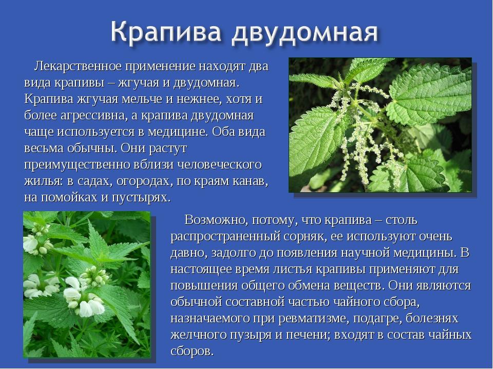 Лекарственное применение находят два вида крапивы – жгучая и двудомная. Крап...