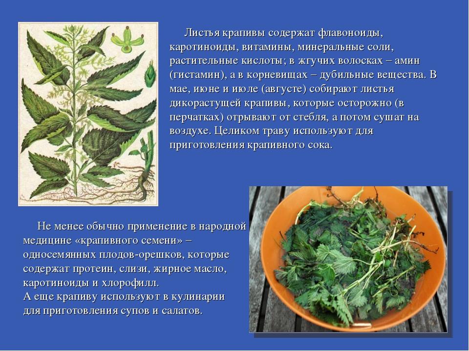 Листья крапивы содержат флавоноиды, каротиноиды, витамины, минеральные соли,...