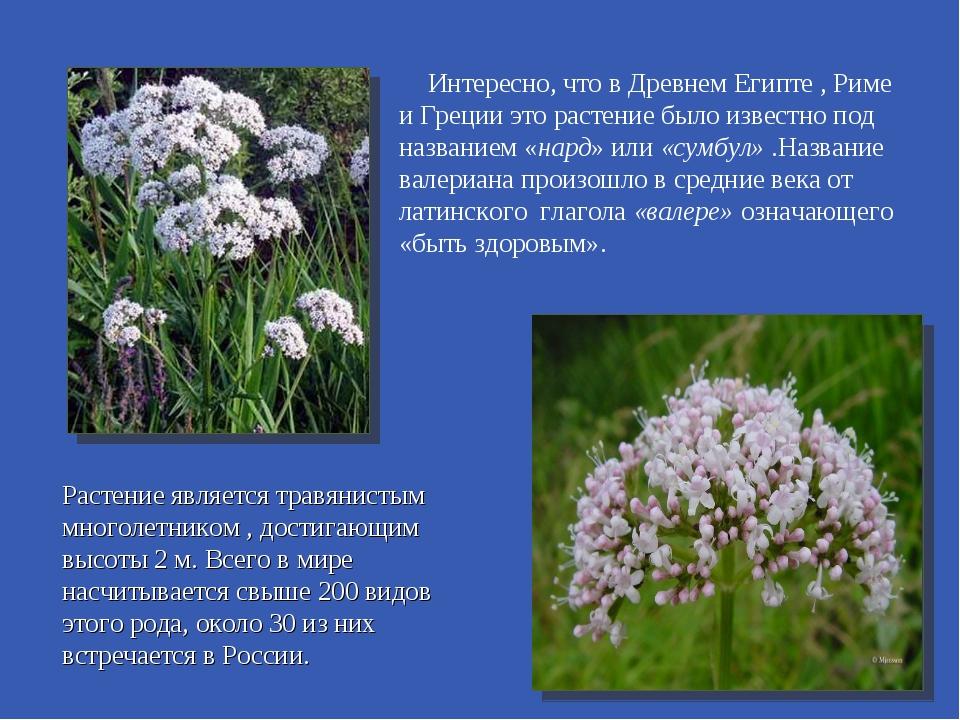 Интересно, что в Древнем Египте , Риме и Греции это растение было известно по...