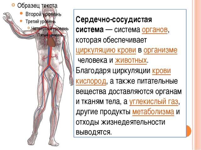 Сердечно-сосудистая система— системаорганов, которая обеспечиваетциркуляци...