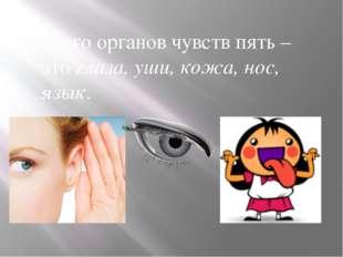 Всего органов чувств пять – это глаза, уши, кожа, нос, язык.