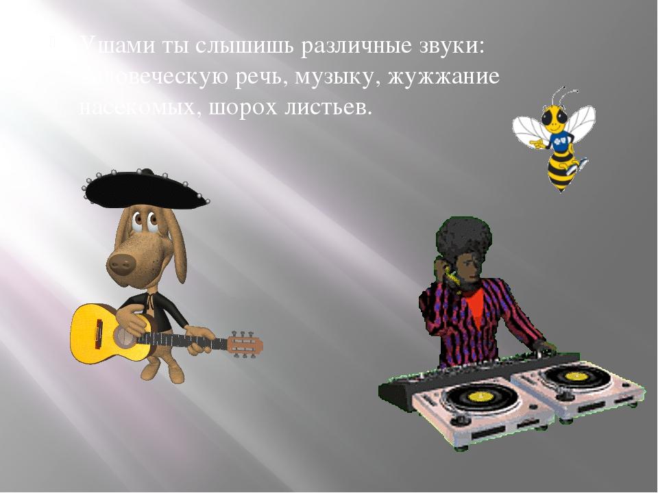 Ушами ты слышишь различные звуки: человеческую речь, музыку, жужжание насеком...