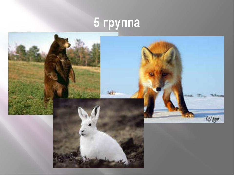 5 группа