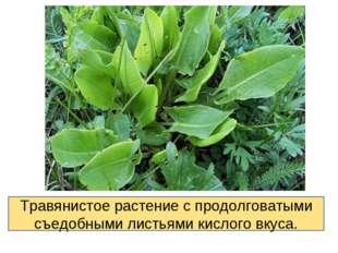 Травянистое растение с продолговатыми съедобными листьями кислого вкуса.