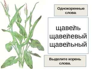 щаве́ль щаве́левый щаве́льный Однокоренные слова: Выделите корень слова.