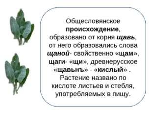 Общесловянское происхождение, образовано от корня щавь, от него образовались