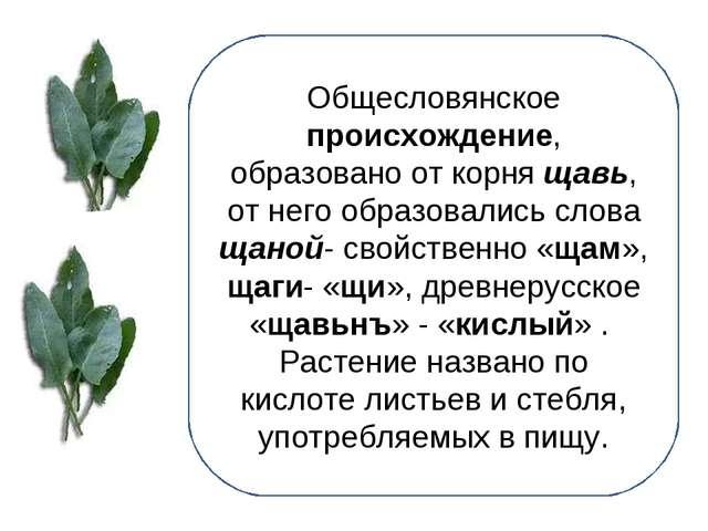 Общесловянское происхождение, образовано от корня щавь, от него образовались...