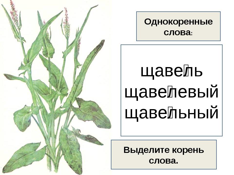 Презентация по русскому языку на тему: словосочетания ща,щу..