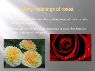 Many meanings of roses All roses symbolize love, but certain colors of roses