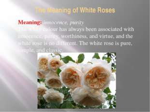 The Meaning of White Roses Meaning: innocence, purity The white colour has al