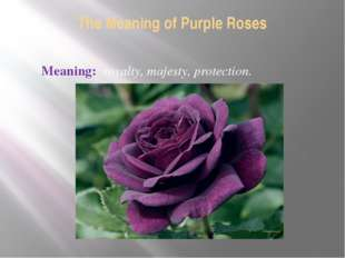 The Meaning of Purple Roses Meaning: royalty, majesty, protection.
