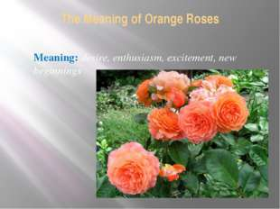The Meaning of Orange Roses Meaning: desire, enthusiasm, excitement, new begi
