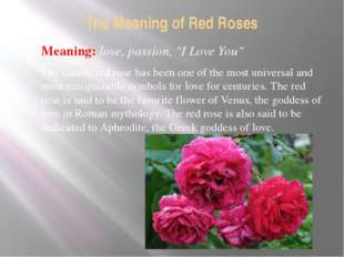 """The Meaning of Red Roses Meaning: love, passion, """"I Love You"""" The classic red"""
