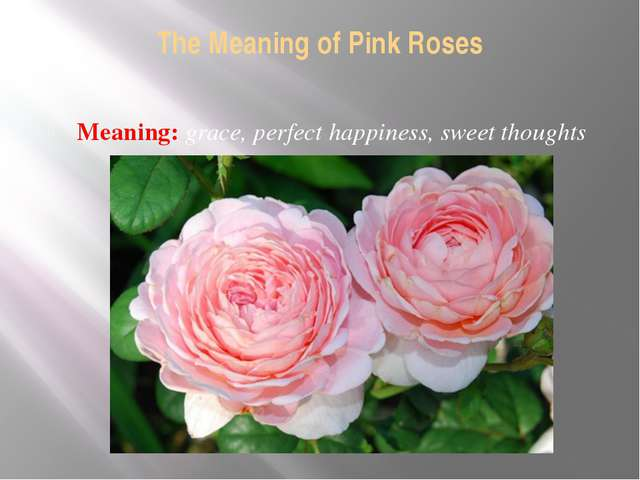 The Meaning of Pink Roses Meaning: grace, perfect happiness, sweet thoughts