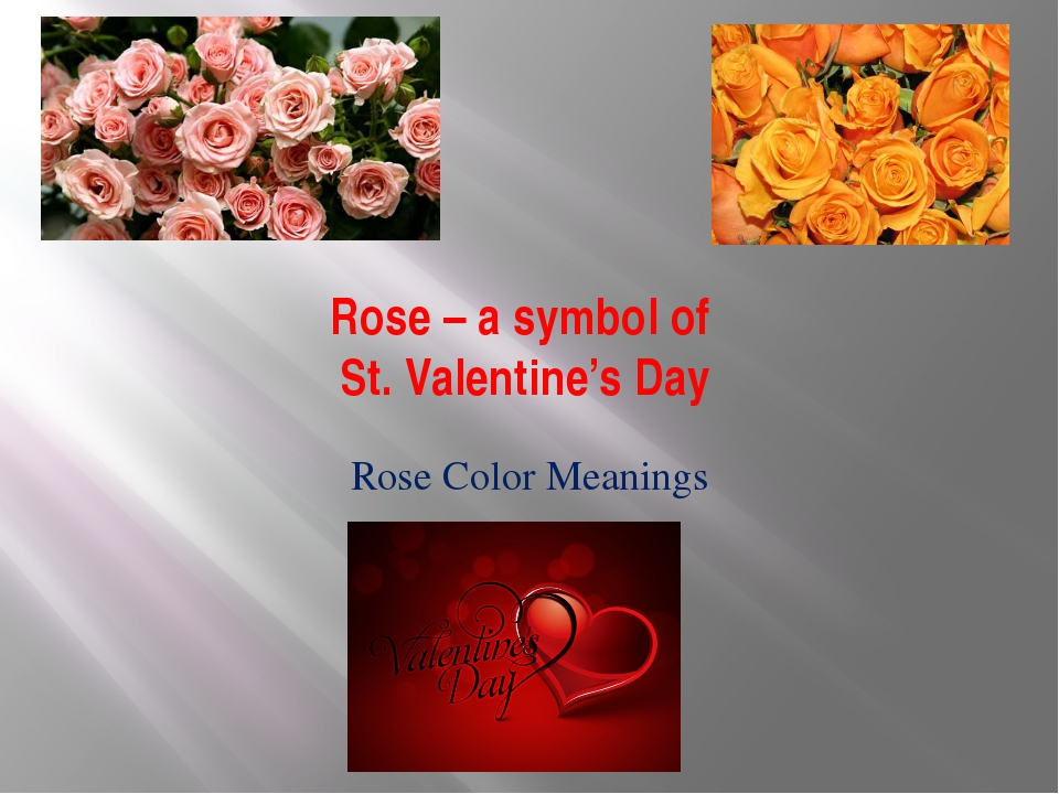 Rose – a symbol of St. Valentine's Day Rose Color Meanings