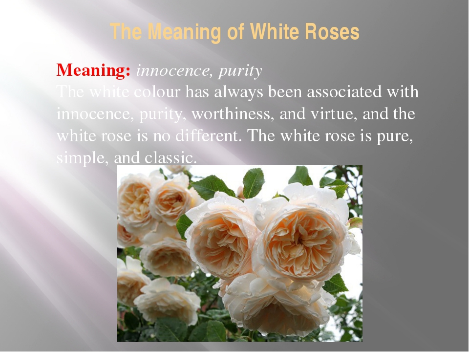 The Meaning of White Roses Meaning: innocence, purity The white colour has al...