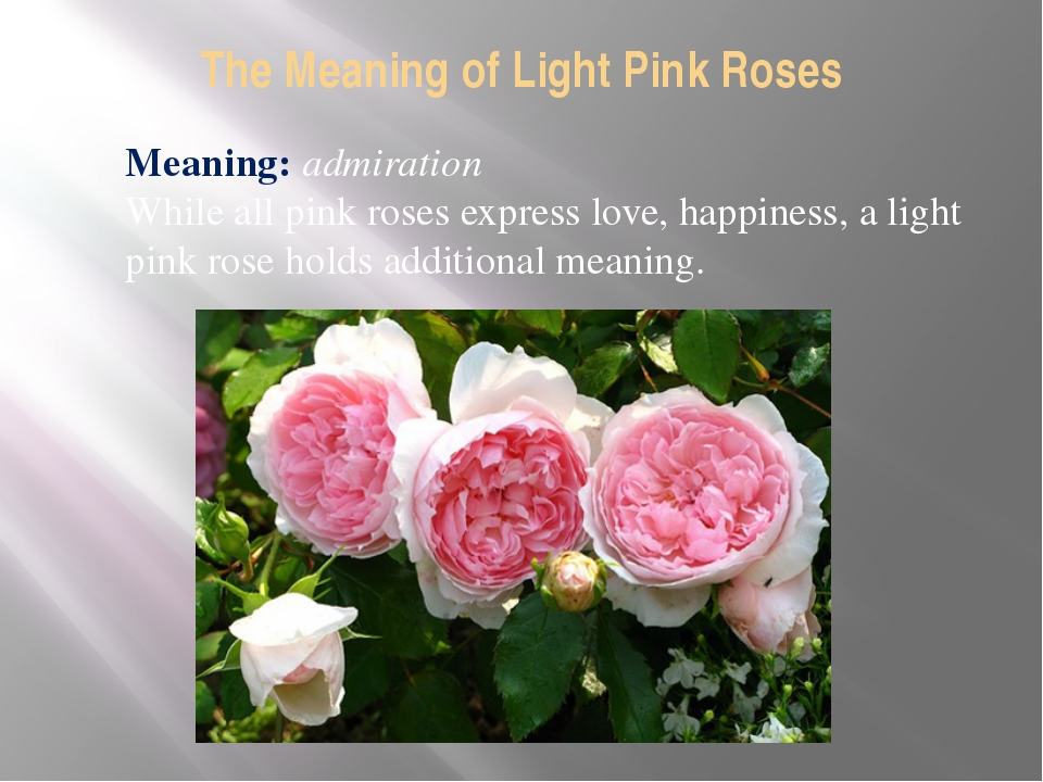 The Meaning of Light Pink Roses Meaning: admiration While all pink roses expr...